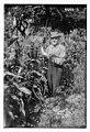 William Thomas Murray in 1918.jpg