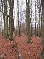Winterdown wood - geograph.org.uk - 94582.jpg
