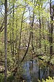 Wolf Creek, Little River Canyon, Alabama April 2018.jpg