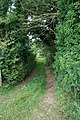 Wooded Lane - geograph.org.uk - 543450.jpg