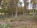 Woodland, Dalton Hall Estate - geograph.org.uk - 1543177.jpg