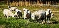 Wooly - panoramio.jpg