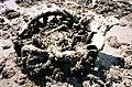 Wreckage of N5-140 off the Nightcliff Foreshore (5184018670).jpg