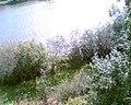 Wysoki nadburzański brzeg - ulica Brokowska w Nurze - panoramio.jpg