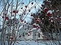 York, Maine, Winter - panoramio.jpg