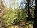 Zámecký park Kyselka 2.jpg