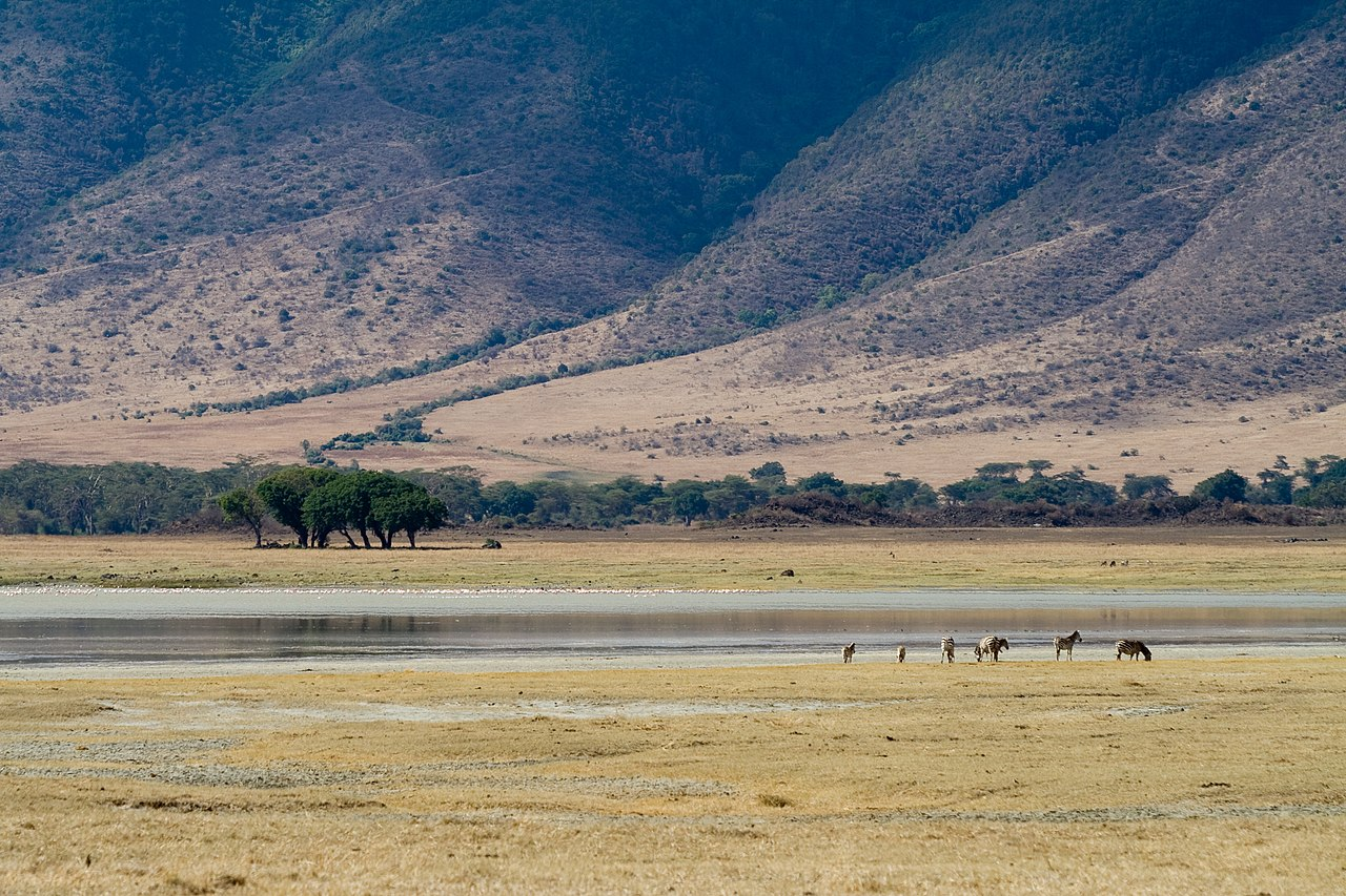 Zebras at Lake Magadi.jpg