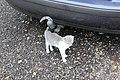 Zemianske Podhradie, mazlící se kotě (1).jpg