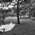 Zicht over de landschapstuin richting het huis, met vijver en vee - Wijnaldum - 20213732 - RCE.jpg