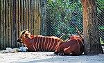 Zoo de Lisboa by Juntas 45.jpg