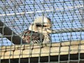 Zoo des 3 vallées - Animaux - 2015-01-02 - i3279.jpg
