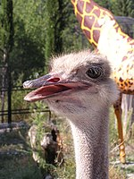 Zoo in Yalta 004.jpg