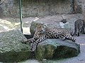 Zoo in Yalta 014.jpg