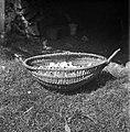 """""""Plet?r"""" (košara) za gobe, trske, sadje itd. Iz leščevih vitr, ob straneh ročce. Podolgem premer 58 cm. Gradenc 1957.jpg"""
