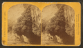 """The Bath,"" a dripping spring in Kanab Cañon. Temperature 69° Fahr, from Robert N. Dennis collection of stereoscopic views 2.png"