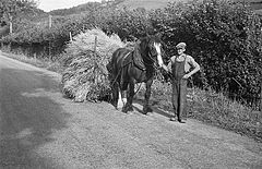 'Car llusg' loaded with corn on the road to Llanfyllin (19315949592).jpg