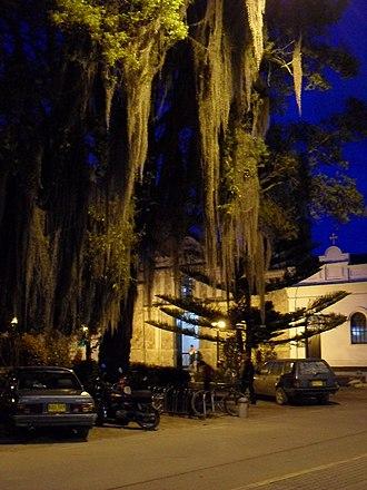 Tocancipá - Image: Árbol iluminado en parque principal
