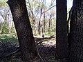 Апостоловский лес сова 3.jpg
