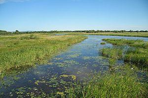 Khanka Nature Reserve - Marshland leading in Lake Khanka