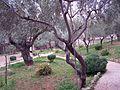 Гефсиманский сад - panoramio (1).jpg