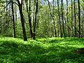 Гора Ореховая, заросли хвоща.jpg