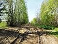 Дорога к Ерошино, конец мая 2013 - panoramio (1).jpg