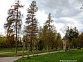 Житомир, парк ім. Гагаріна 01.jpg
