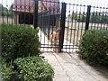 Зоопарк Асканія - Нова Херсонська обл.jpg