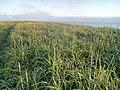 Камчатское побережье Охотского моря.jpg