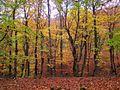 Лес на Су-Ате 11.10.11 - panoramio.jpg