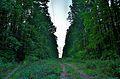 Миљаковачка шума5.JPG