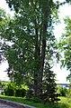 Наводницкий парк в Киеве. Фото 51.jpg