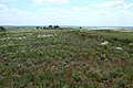 Оренбургская степь в конце мая - panoramio (1).jpg