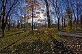Осень в парке DSC 8061.jpg