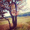 Осінь найкрасивіша в Україні.jpg