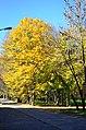 Парк Чекмана у місті Хмельницькому. Фото 3.jpg
