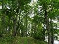 Парк возле усадьбы muižas parks (1) - panoramio.jpg