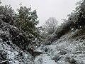 Перший сніг, 12 жовтня, (зима 2015-2016) - panoramio.jpg