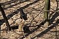 Пролісок Собаки IMG 0983.jpg