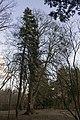 Сирецький дендрологічний парк 33.jpg