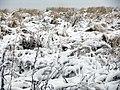 Снежное покрывало на травы - panoramio.jpg