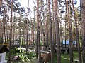 Тимирязево (Томская область) 007.jpg