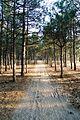 Тропа в балобановском лесу.jpg