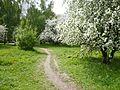 Тропинка - panoramio (26).jpg