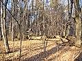Украина, Киев - Голосеевский лес 224.JPG