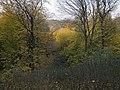 Украина, Киев - Голосеевский лес 73.jpg