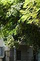 בית מגנט - רוטשילד 93 (1).JPG