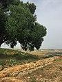 أطلال مسجد في موقع ليكسوس الأثري قرب مدينة العرائش المغربية.jpg