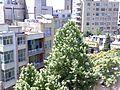 درخت - panoramio (2).jpg
