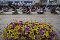 عکس های مراسم ترتیل خوانی یا جزء خوانی یا قرائت قرآن در ایام ماه رمضان در حرم فاطمه معصومه در شهر قم 08.jpg